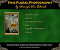 Fine Floral Photography